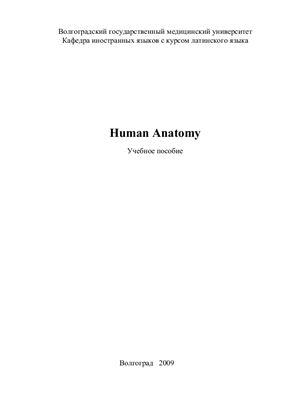 Крайникова С.А., Охотская В.В. Human Anatomy