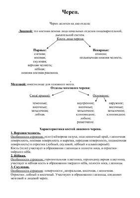 Реферат - Анатомия. Череп