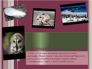 Різноманітність птахів (від найменших до найбільших)