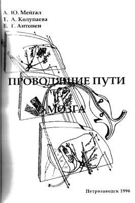 Мейгал А.Ю., Колупаева Т.А., Антонен Е.Г. Проводящие пути головного мозга