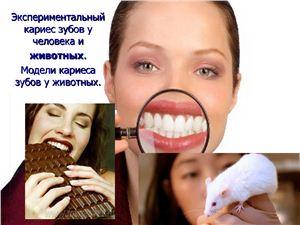 Презентация - Экспериментальный кариес зубов у человека и животных. Модели кариеса зубов у животных