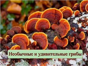 Необычные и удивительные грибы