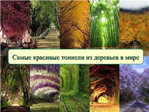 Самые красивые тоннели из деревьев в мире