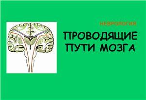 Проводящие пути нервной системы. Периферическая нервная система