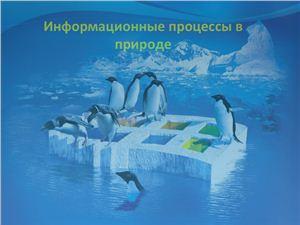 Презентация - Информационные процессы в природе