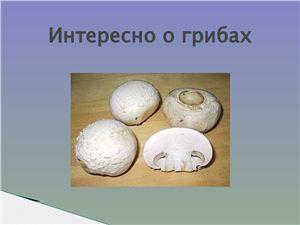 Интересно о грибах