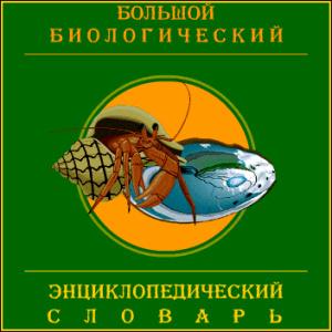 Программа - Большой биологический энциклопедический словарь