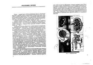 Гуранова Н.Н., Усанова А.А., Костычева Т.В. Избранные разделы нефрологии