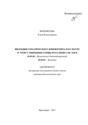 Ворошилова Е.В. Индукция соматического эмбриогенеза в культуре in vitro у гибридных семян Pinus sibirica du tour