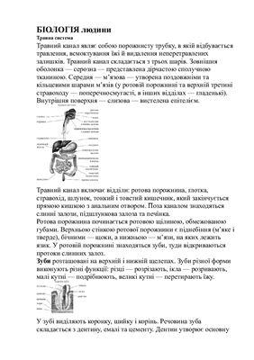 Конспект біологія людини
