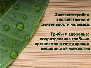 Значение грибов в хозяйственной деятельности человека