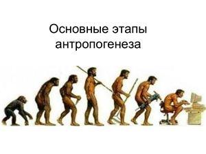 Презентация - Основные этапы эволюции человека