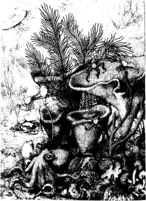 Петров К.М. Биогеография океана. Биологическая структура океана глазами географа