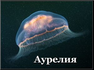 Презентация - Черное море: аурелия