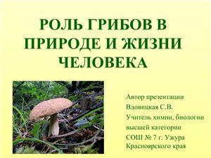 Роль грибов в природе и жизни человек