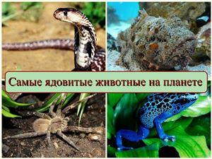 Самые ядовитые животные на планете