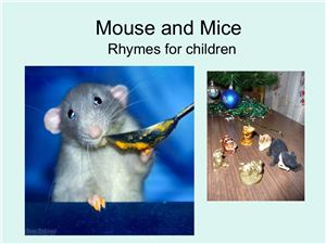 Mouse and Mice