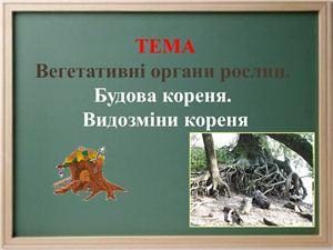 Вегетативні органи рослин. Будова кореня. Видозміни кореня