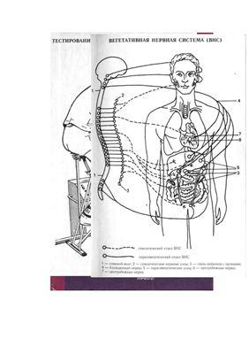 Смирнов В.М., Дубровский В.И. Физиология физического воспитания и спорта
