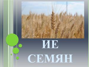Строение семян