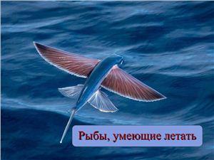 Рыбы, умеющие летать