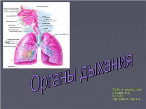 Презентация - Органы дыхания