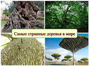 Самые странные деревья в мире