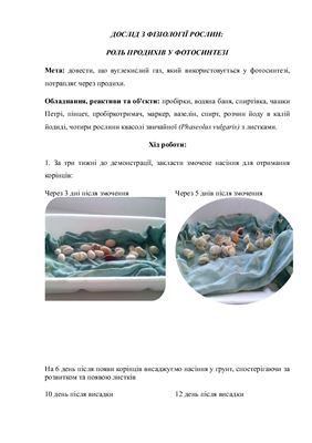 Роль продихів у фотосинтезі