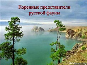 Коренные представители русской фауны