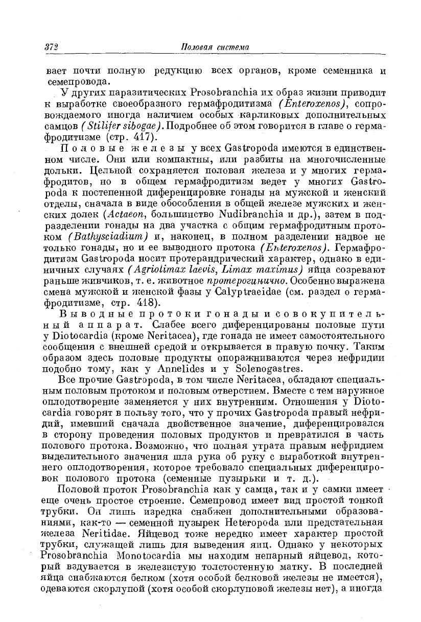 penis la ampullaria)